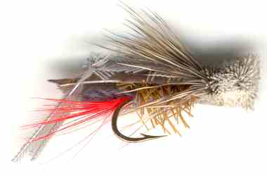 Gray Hopper Dry Fly for Rainbow trout fishing
