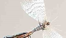 Blue Dun Mayfly Spinner fly pattern