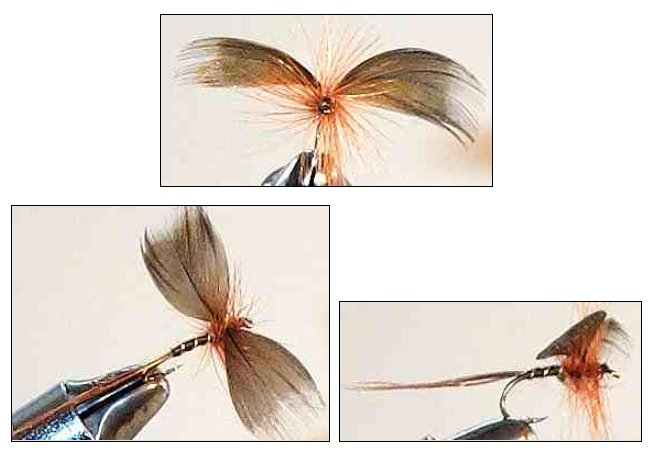 Brown Drake Mayfly Spinner for trout fishing