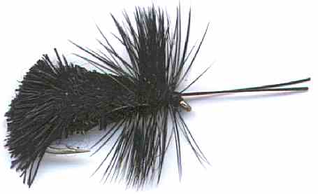 Goddard's Black Caddis fly pattern for trout fishing