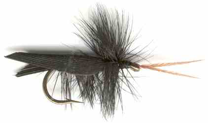 Black Horned Tent-winged Caddis (Sedge) Fly fishing pattern