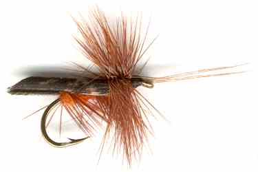Dark Brown Horned Tent Winged Caddis trout fishing fly