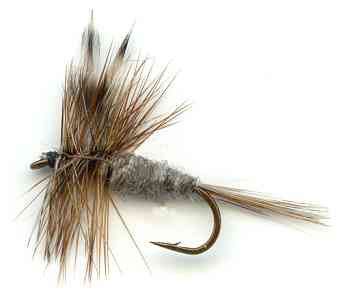 The Adam's dry fly for trout fishing