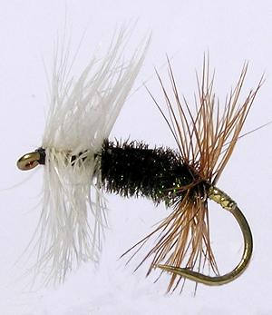 Renegade Dry Fly pattern for Rainbow and Brown trout fishing
