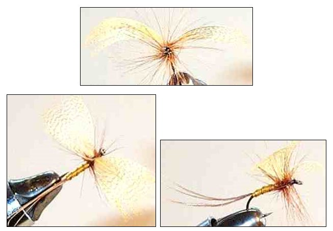 Light Cahill Mayfly Spinner dry fly for trout fishing
