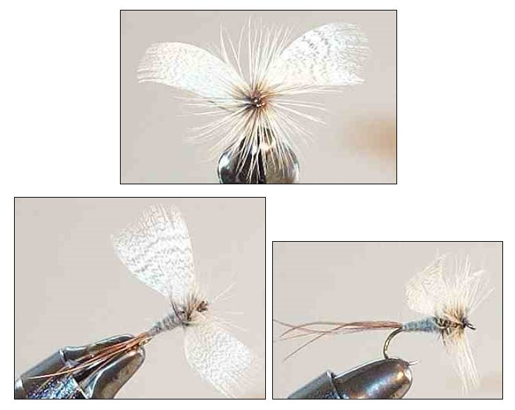Blue Dun fanwing Mayfly Spent Spinner fly pattern for trout fishing