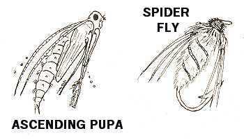 This diagram shows what an ascending caddis or mayfly pupa looks like