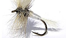 White Wulff Dry fly pattern