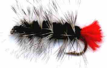 Black Woolly Worm Caddis Larva Fly pattern