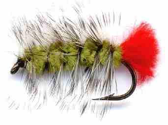 Olive Woolly Worm Caddis Larva Fly pattern