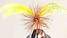 Yellow Drake Mayfly Spinner fly pattern