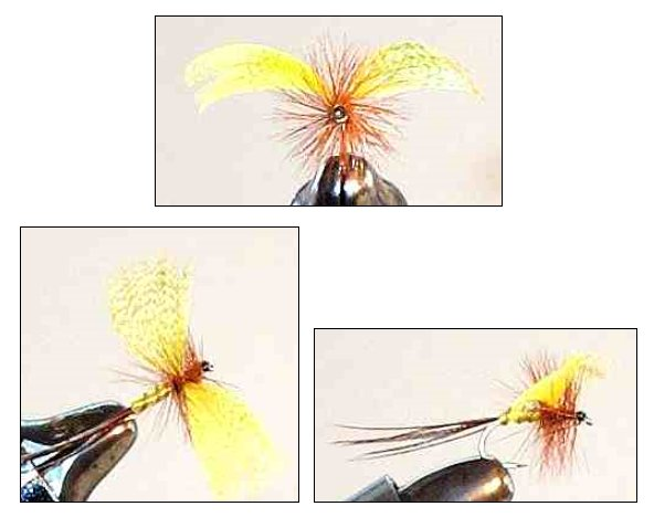 Yellow Drake fanwing Mayfly Spinner fly pattern for trout fishing
